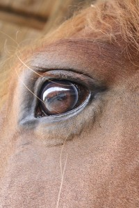 how to draw horse eyes part 2 close up detail art2art