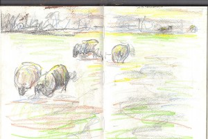 sketchbook_sheep_autumn_light_Marianne_Dorn