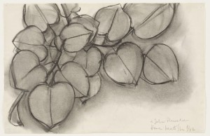 branch-of-a-judas-tree-by-henri-matisse-1942_charocoal-on-paper_25.2x39.4cm