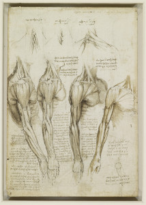the_muscles_of_the_shoulder_arm_and_neck_Leonardo_c1510